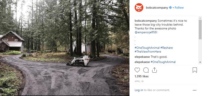 bobcat_shared_image_on_instagram_in_woods