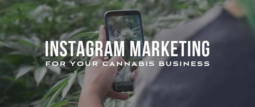 Instagram Marketing for your Cannabis Business